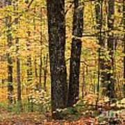 Autumn Woods 1 Poster