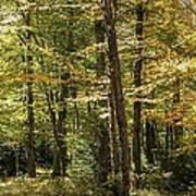 Autumn Woods II Poster