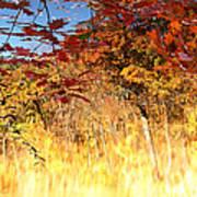Autumnal Fire Poster by James Hammen