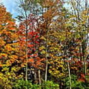Autumnal Foliage Poster