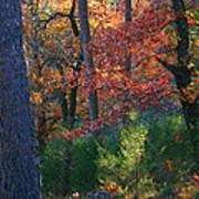 Autumnal Rock Poster