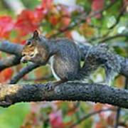 Autumnal Squirrel Poster