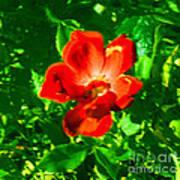Autumn's  Flower Poster