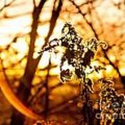 Autumn's Golden Glow Poster
