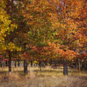 Autumn's Miracle Poster