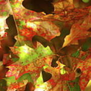 Autumn's Red Oak Leaves Poster