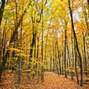 Autumn's Splendor Poster