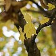 Autumn's Wondrous Colors 1 Poster
