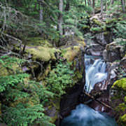 Avalanche Creek In Cedar Forest Poster