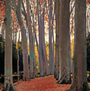 Avenue Of Plain Trees Poster