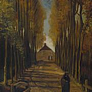 Avenue Of Poplars In Autumn Poster