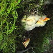 Awe Inspiring Fungi Three Poster