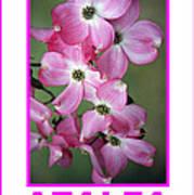 Azalea Savannah Georgia Poster