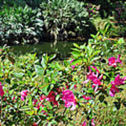 Azaleas By The Pond Poster