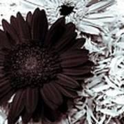 B/w Flower Poster by Ankeeta Bansal