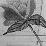 B W Wood Flower Poster