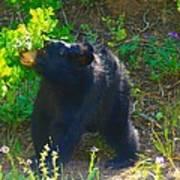 Baby Bear Cub Poster