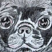 Baby Black Pug Poster