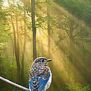 Baby Blue In Morning Fog Sunlight Poster
