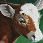 Baby Calf Poster