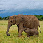 Baby Elaphant Poster