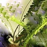 Baby Ferns Unfurling For Jim Poster