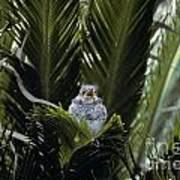 Baby Mockingbird Poster