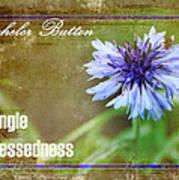 Bachelor Button Poster