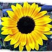 Back Forty Sunflower Poster