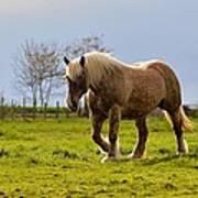 Back Light Horse Poster