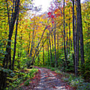 Back Road In The Adirondacks Poster