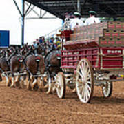 Back View Anheuser Busch Clydesdales Pulling A Beer Wagon Usa Poster