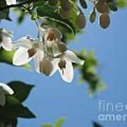 Backlit Blossom Poster