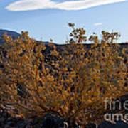 Backlit Desert Foliage Poster