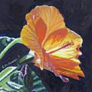Backlit Hibiscus Poster