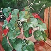 Backyard Begonia Poster