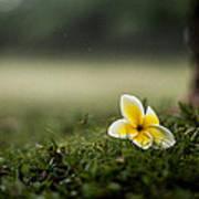 Backyard Flower Poster by Jason Bartimus
