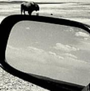 Badlands Bison Climbs Colossal Car Poster