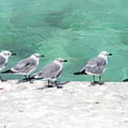 Bahama Birds Poster