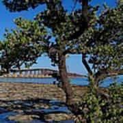 Bahia Honda Rail Bridge And Tree Poster