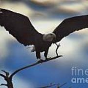 Bald Eagle And Clouds Poster