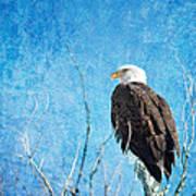 Bald Eagle Blues Poster