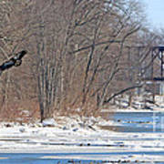 Bald Eagle Fledgling Near Ludwig Mill 2576 Poster