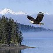 Bald Eagle In Flight Over The Inside Poster