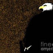 Bald Eagle In Repose Poster