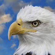 Bald Eagle In The Clouds Poster