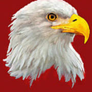Bald Eagle Painting Poster