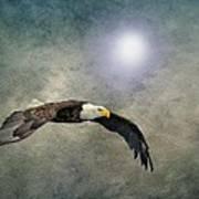 Bald Eagle Textured Art Poster