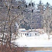 Bald Eagles In Tree In Grand Rapids Ohio 3996 Poster