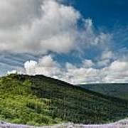 Bald Hills In Spring Poster
